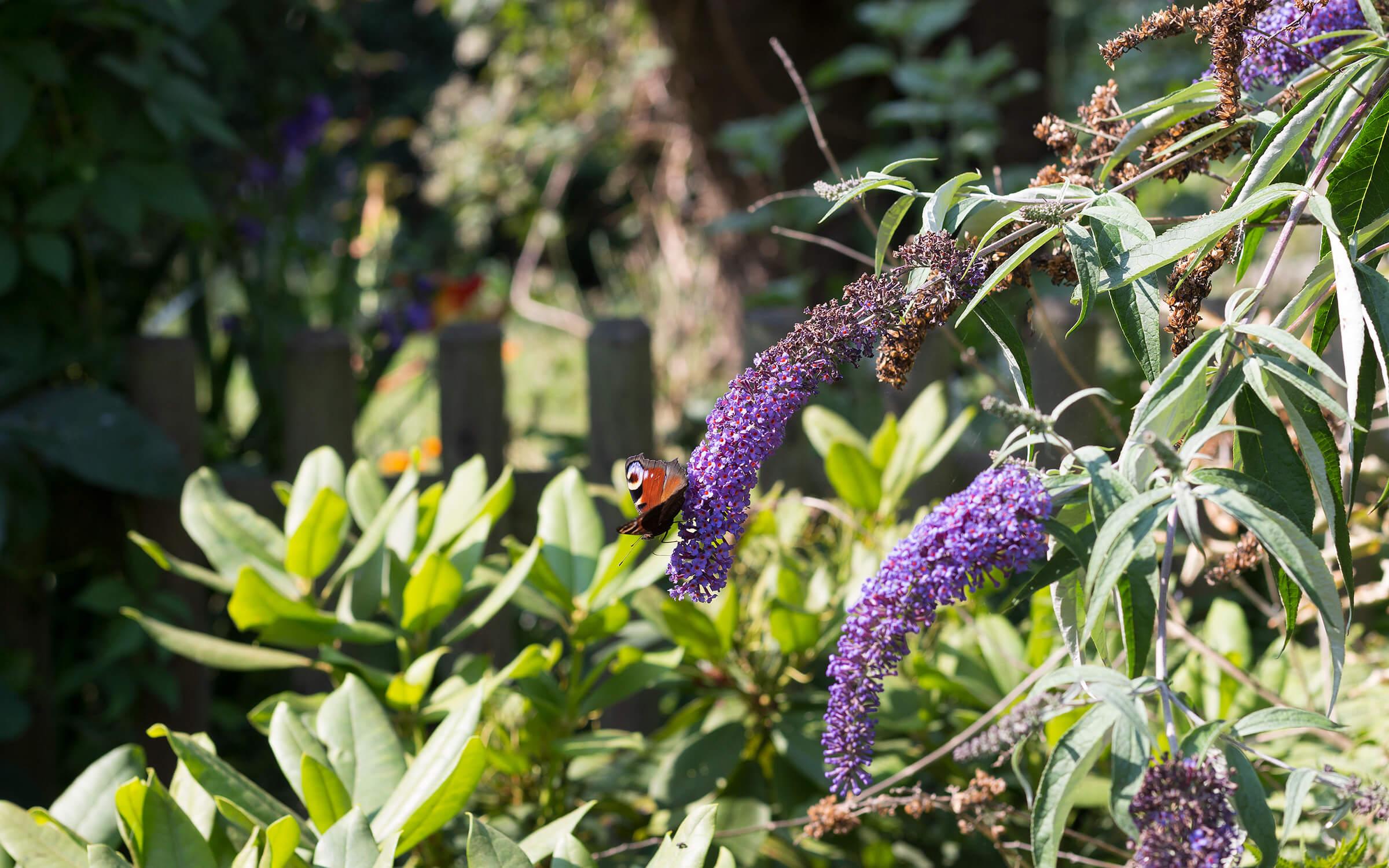 GSB Design Blume Schmetterling