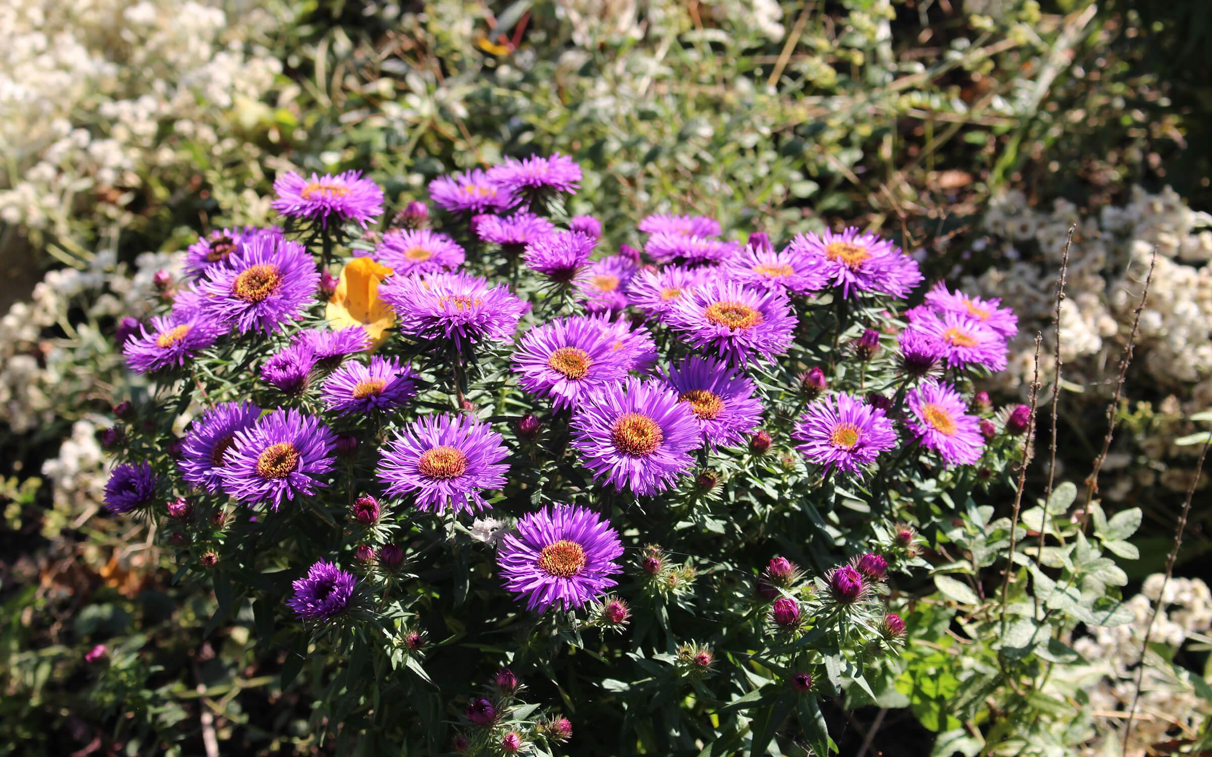 GSB Design Blumen